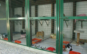 Gallery photo 8 - Little Dog Kennels and Cattery