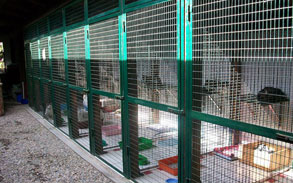 Gallery photo 65 - Little Dog Kennels and Cattery