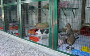 Gallery photo 76 - Little Dog Kennels and Cattery