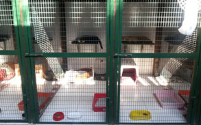 Gallery photo 78 - Little Dog Kennels and Cattery